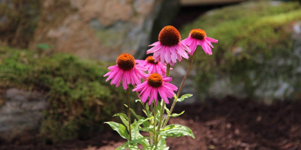 Perennials & Annuals