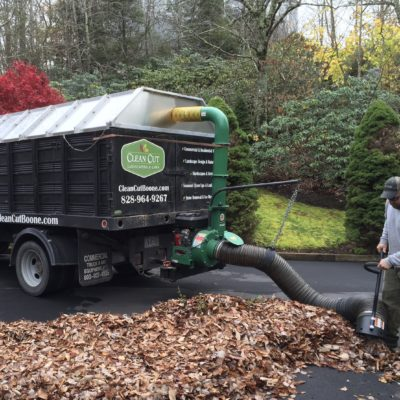 Seasonal Clean Ups
